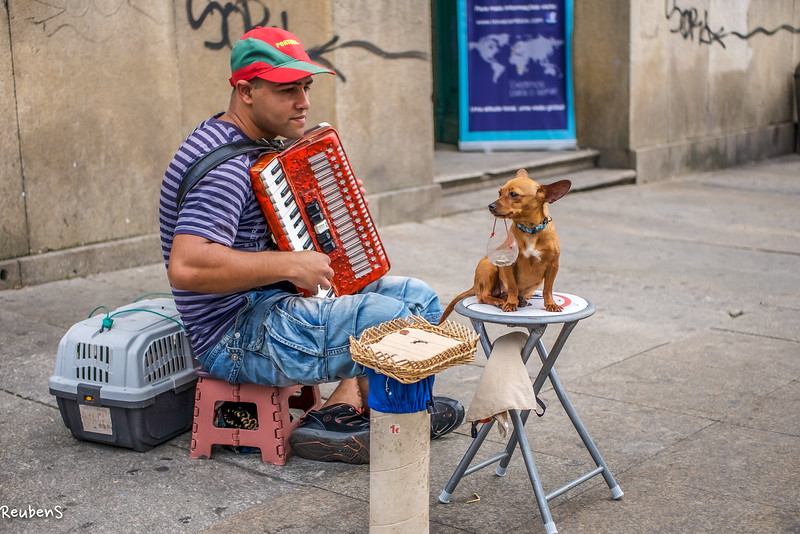 The musician and dog.jpg