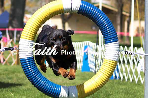 Run 4 T2B GROUPS - Agility May 14 2017