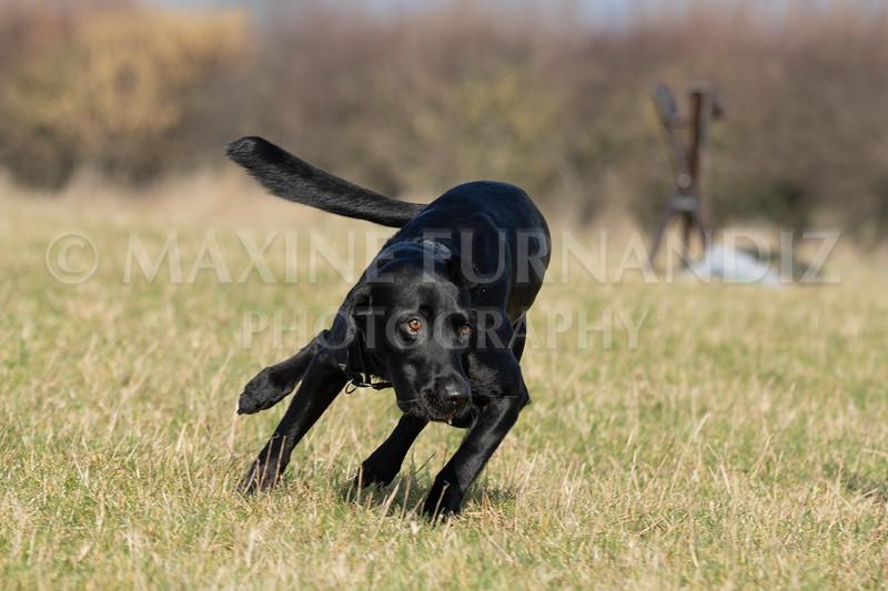 Dog Training Novice GD Feb2019-5827.jpg