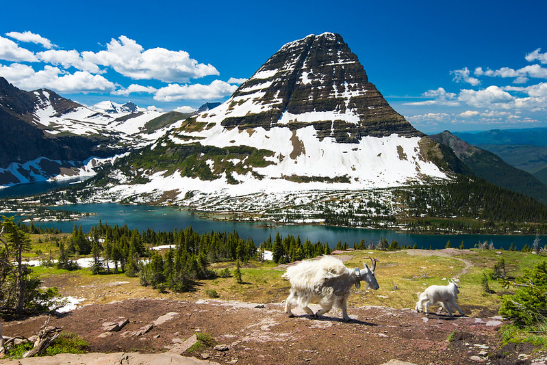 Best Places to Hike in Glacier National Park Header Image.jpg