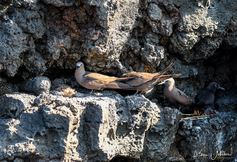 2018 Sombrero Island-10.jpg