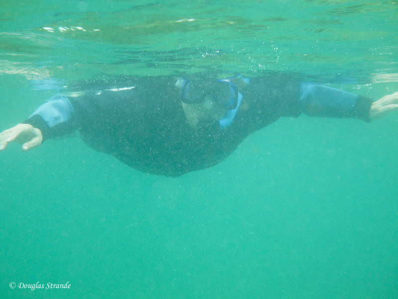 Louise snorkeling at Cormorant Point, Floreana Island