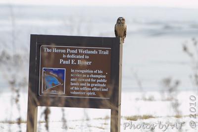 2010 Birding