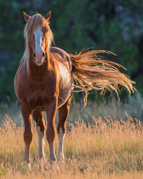 Horse_DRM6891.jpg