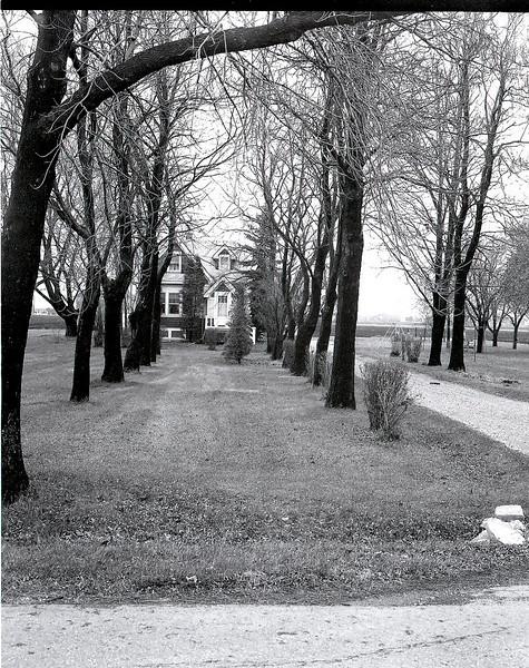 47025050_tree rows house