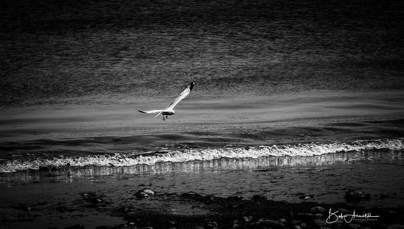Block Island-26.jpg