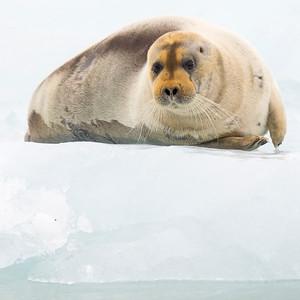 Svalbard 78° 26'.552 Nord