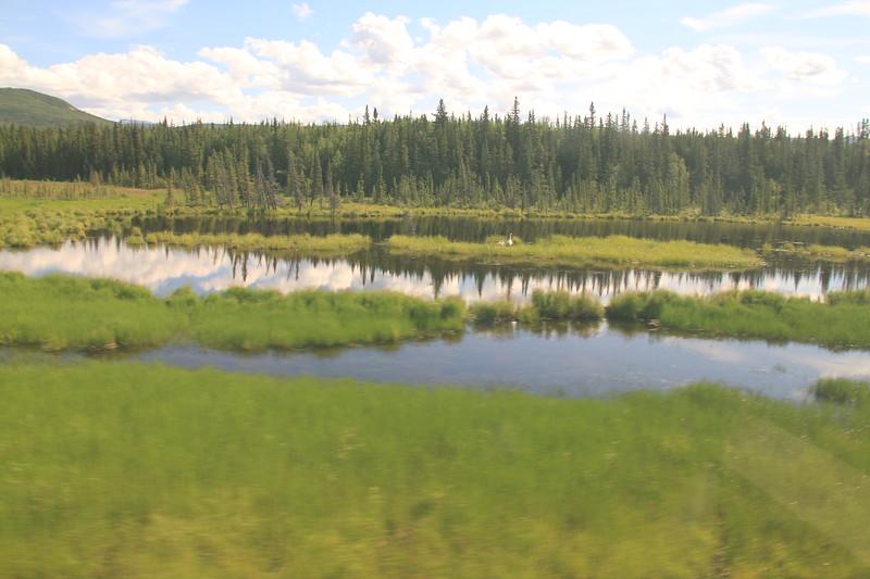 20160709-065 - Alaska Railroad-Trumpeter Swans.JPG