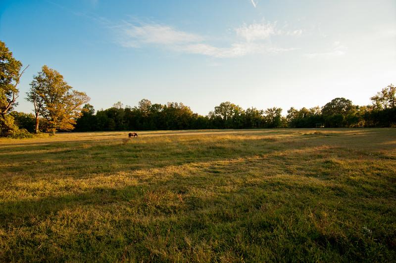 Woodlyn Fall -130930-2024.jpg