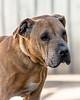 RescuedogsCanon_EOS_5D_Mark_III-2893