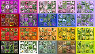 Paintbox Floral Mosaics