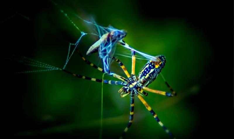Spiders-Arachnids-059.jpg