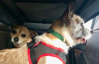 Roxy and Molly