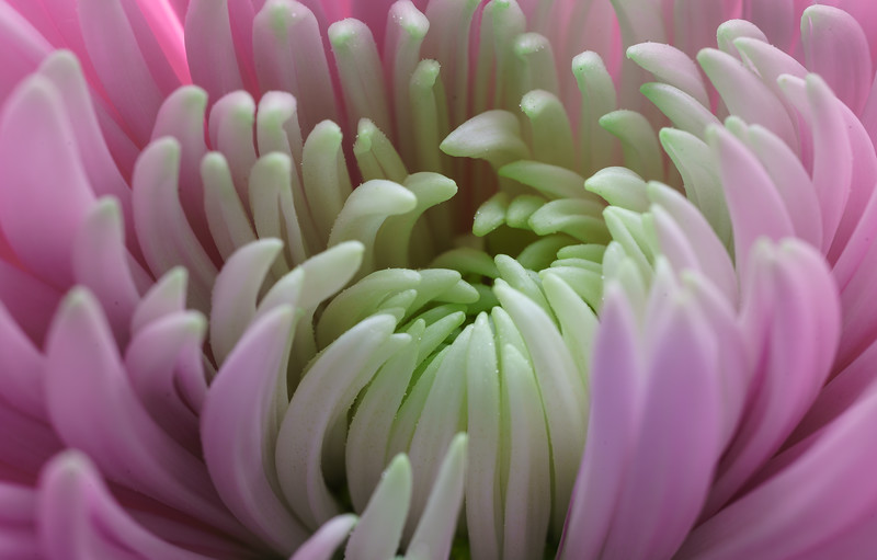 FlowerMacro00003.jpg