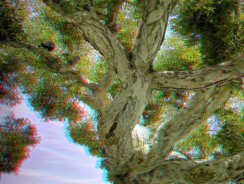 AC_SOPH_HDR_03.jpg