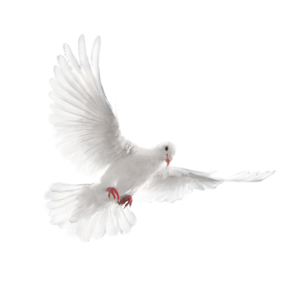 dove_ (16).png