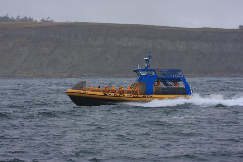 Orcas000009.JPG