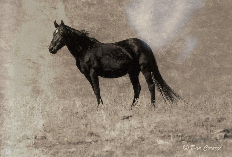 Black stallion-1112.jpg