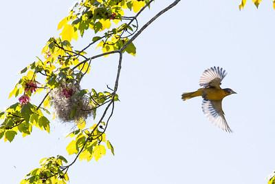 Favorite Birds - Winter, Spring 2014