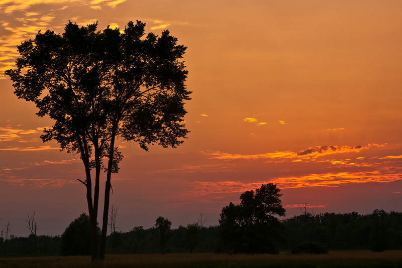 Elm tree at sunset_July 11-2011_06.jpg