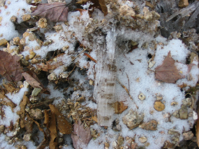 Ice dendrites on Nancy Brook Trail