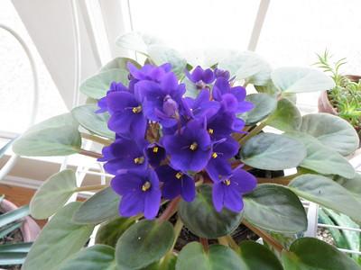 2010-01-15 plants