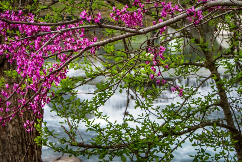 Blooms at the Falls