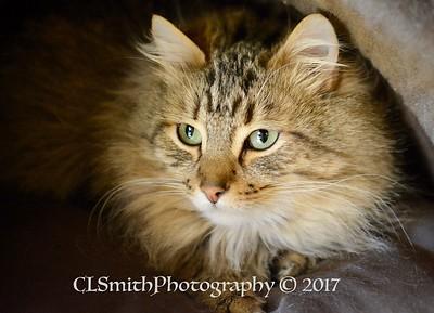 Oregon Humane Society 2017