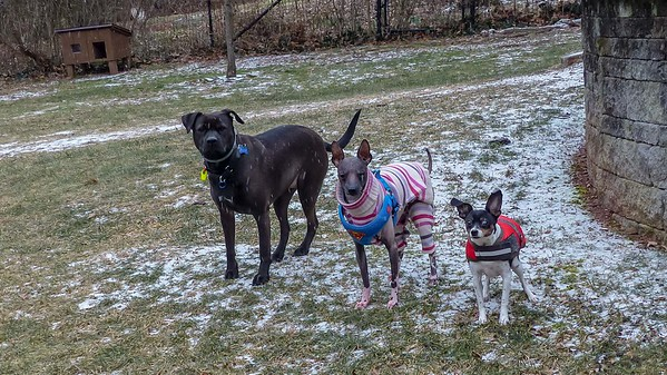 2019-01-29 Alfie, Morgan, Scout, and Oreo
