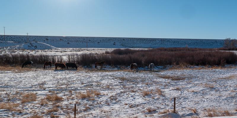 Wyoming Cows & Horses