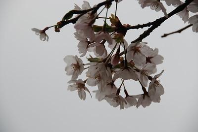 Nasunogahara Park