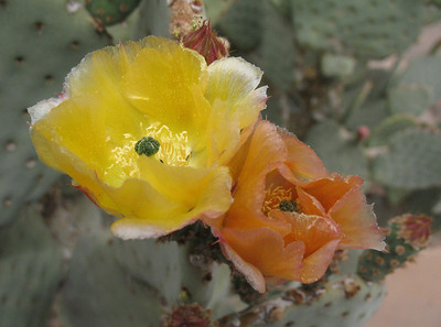 Wildflowers of the Southwest