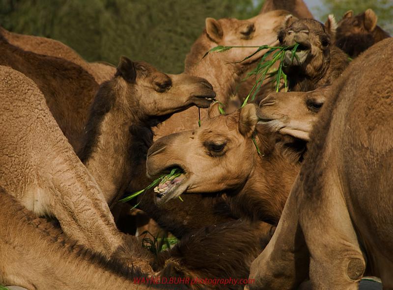 INDIA2010-0206A-301A.jpg