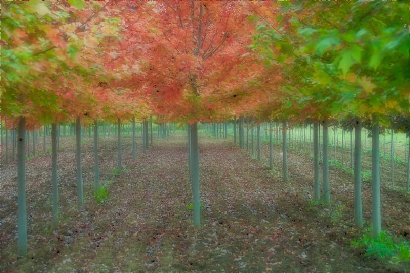 Trees in blur.jpg