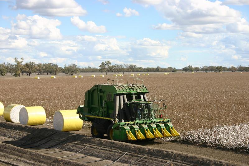 Cotton picking 3