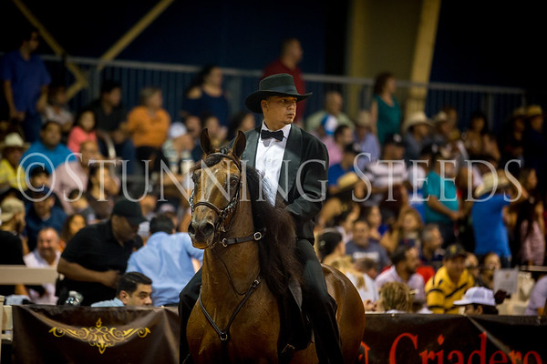 Fino Stallions 5-6yrs