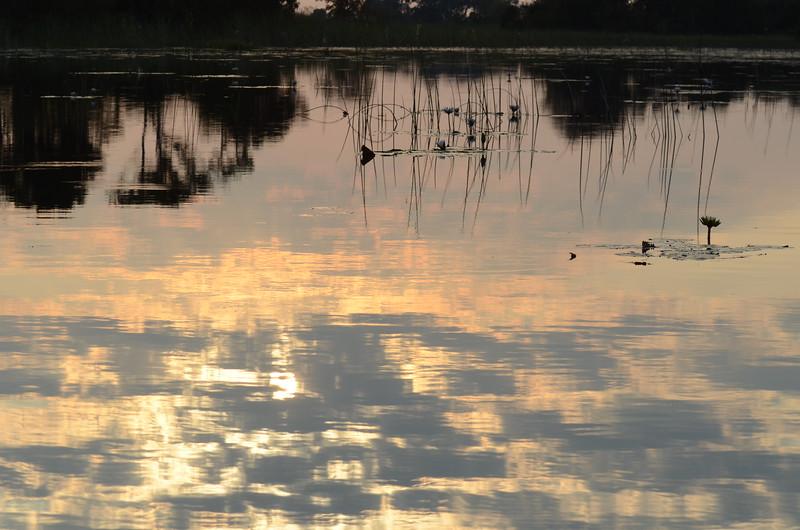 100 - Reflections - Xigera - Anne Davis