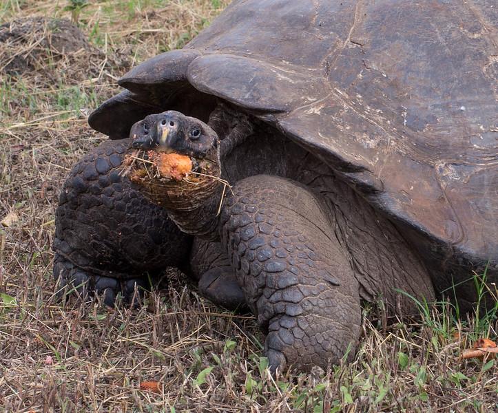 Galapagos_MG_5052.jpg
