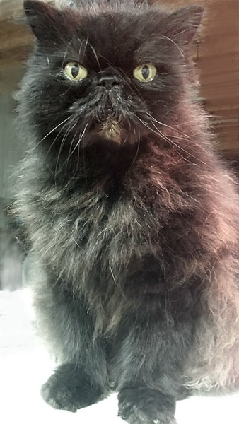 Paul's  cat