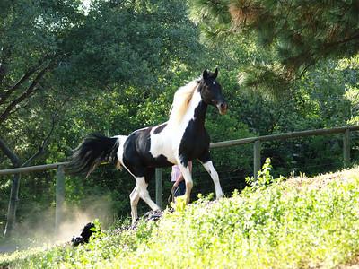 Greenwood Horses