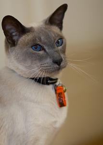 Blue Eyed Mr B.