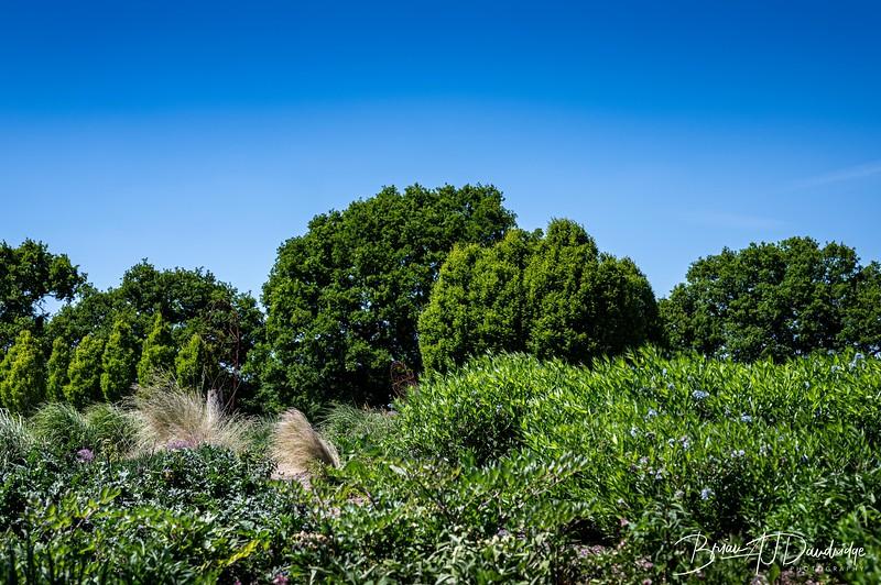 Sussex Prairie Gardens Z6-3759.jpg