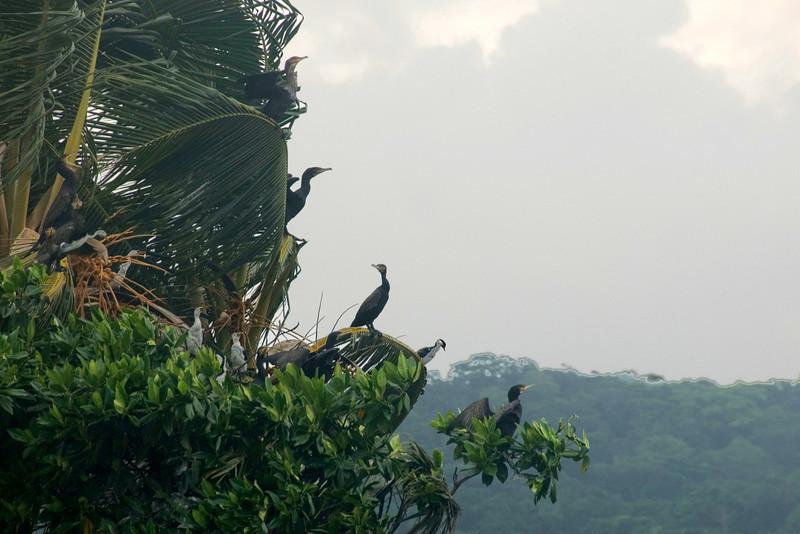 Birds on Island, Rennell Island - Solomon Islands