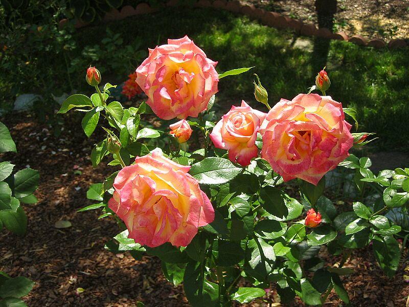 garden-2002-06-0084_std.jpg