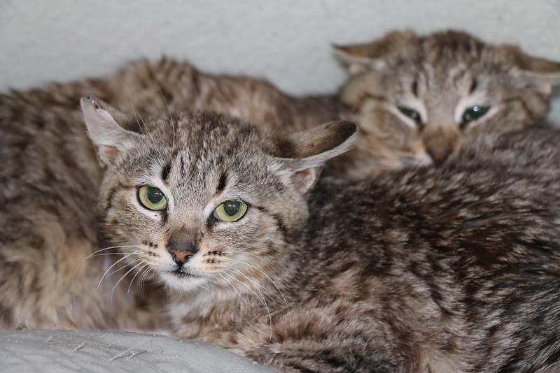 Feral kittens - 0323015 - 1.JPG