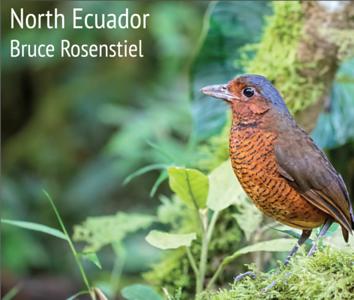 Ecuador North