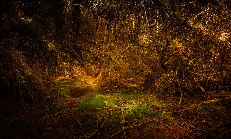 Forest Shadows-107.jpg