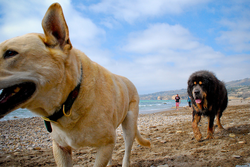 dogs_beach-066.jpg