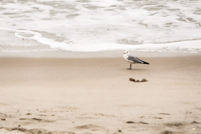 She Watches Seagulls By The Seashore
