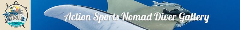 SDSDA-Ex-Report-Banner-1350x170.jpg